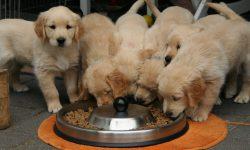 5 Tips Memilih Makanan Anjing Terbaik