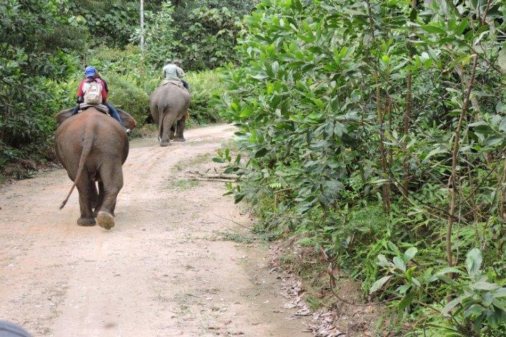 pelatih gajah