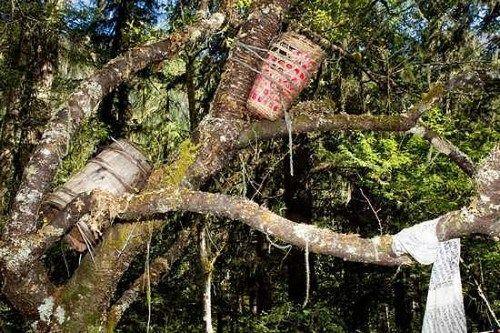 tradisi pemakaman unik Tree Bound